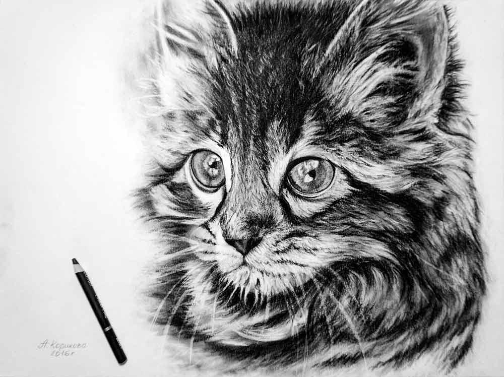 Угольный карандаш для рисования - рисунок кота - фото