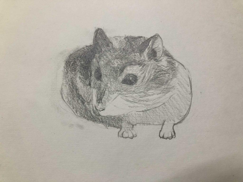 Как нарисовать карандашом хомячка - джунгарский 4 этап - фото