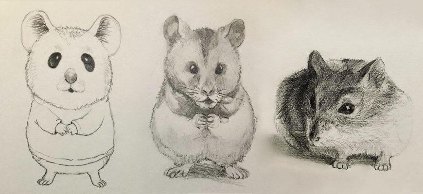 Как нарисовать карандашом хомячка - фото