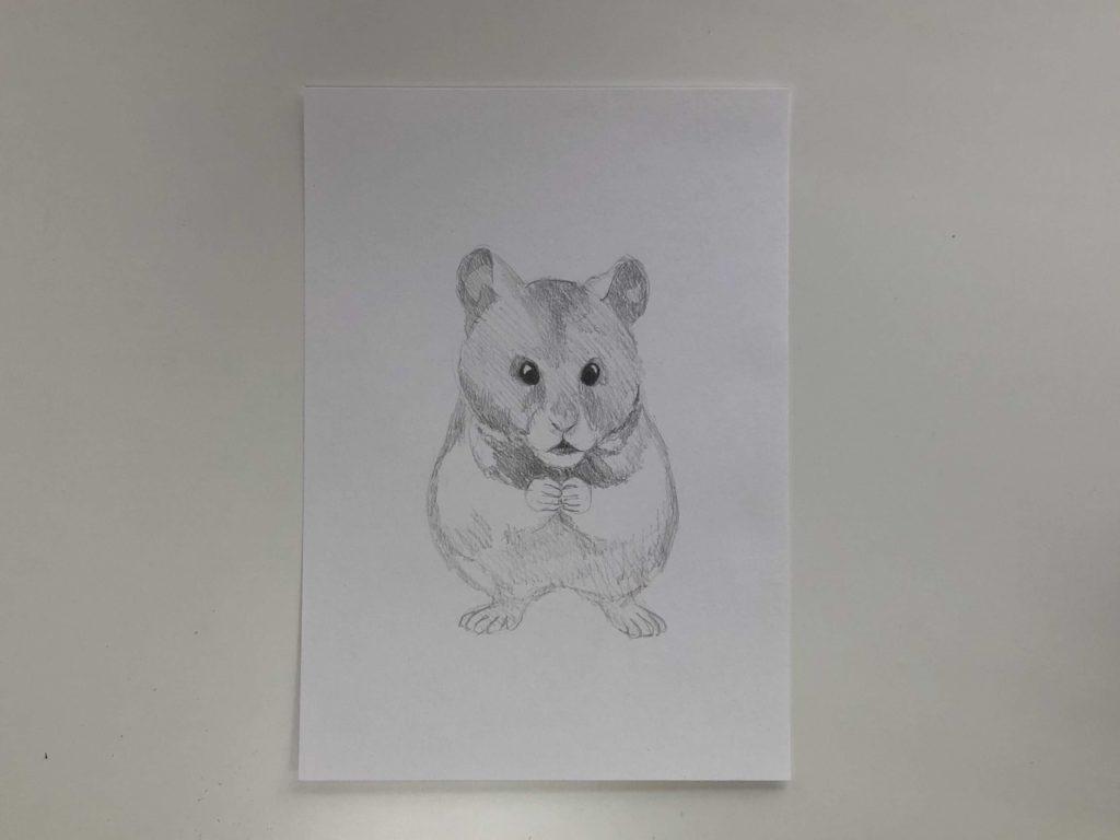 Как нарисовать карандашом хомячка - простой хомяк 2 этап - фото