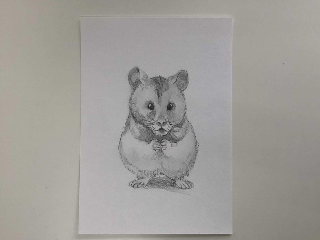Как нарисовать карандашом хомячка - простой хомяк 3 этап - фото