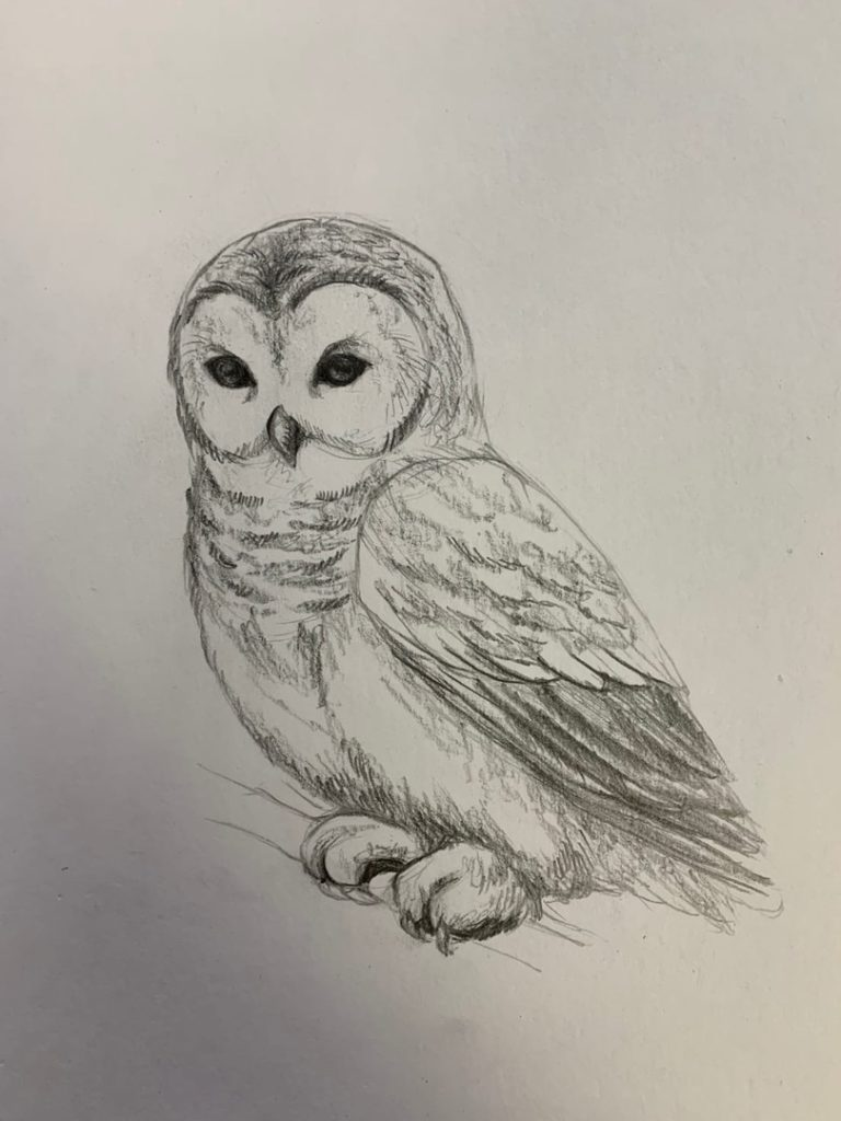 Как нарисовать карандашом сову на ветке 4 этап - фото