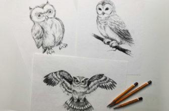 Как нарисовать карандашом сову поэтапно - фото