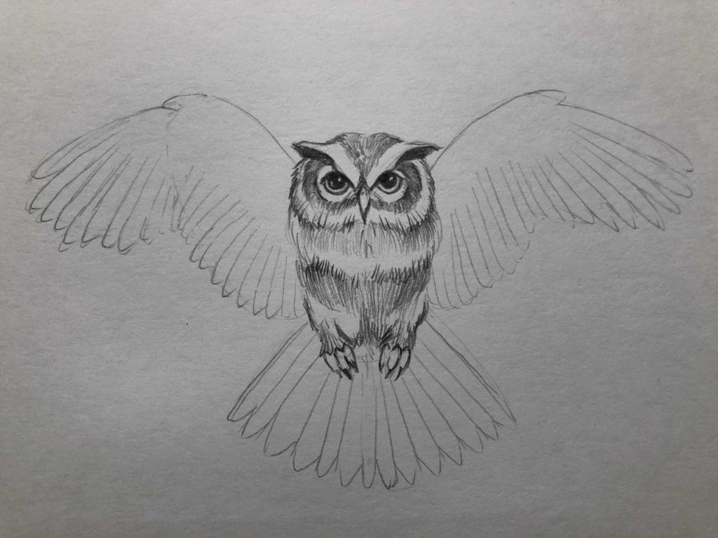 Как нарисовать карандашом сову с расправленными крыльями 5.1 этап - фото