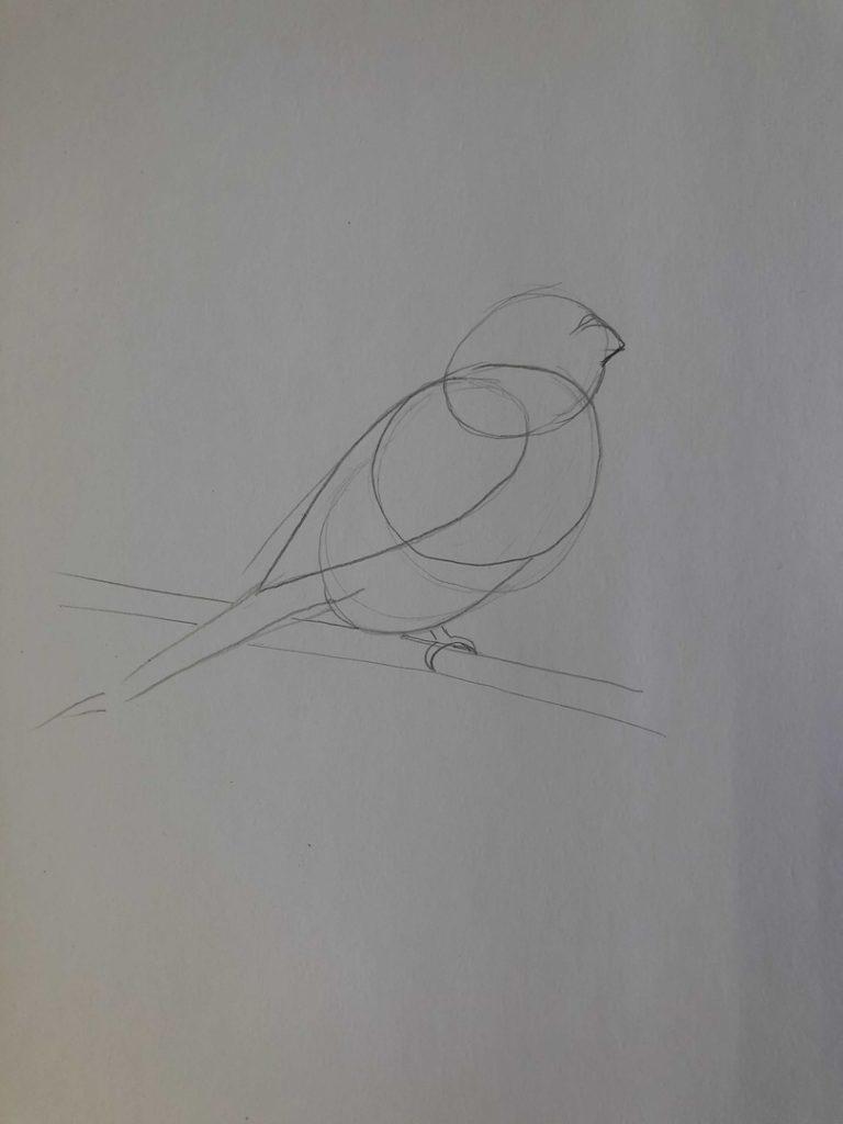 Как научиться рисовать карандашом - птица 1 этап - фото