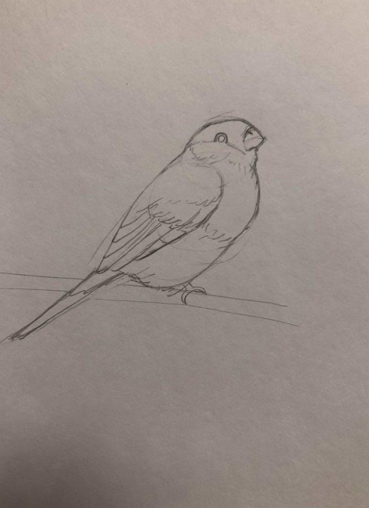 Как научиться рисовать карандашом - птица 2 этап - фото