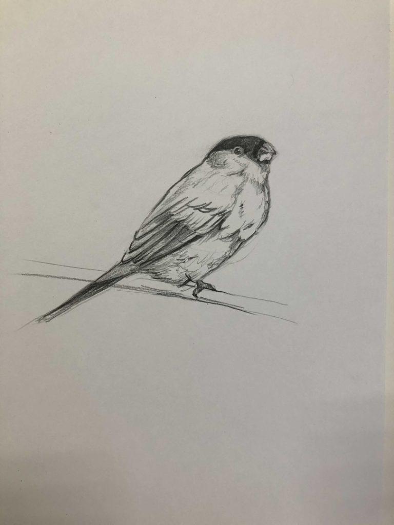 Как научиться рисовать карандашом - птица 3 этап - фото