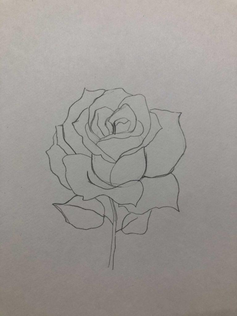 Как научиться рисовать карандашом - роза 3 этап - фото