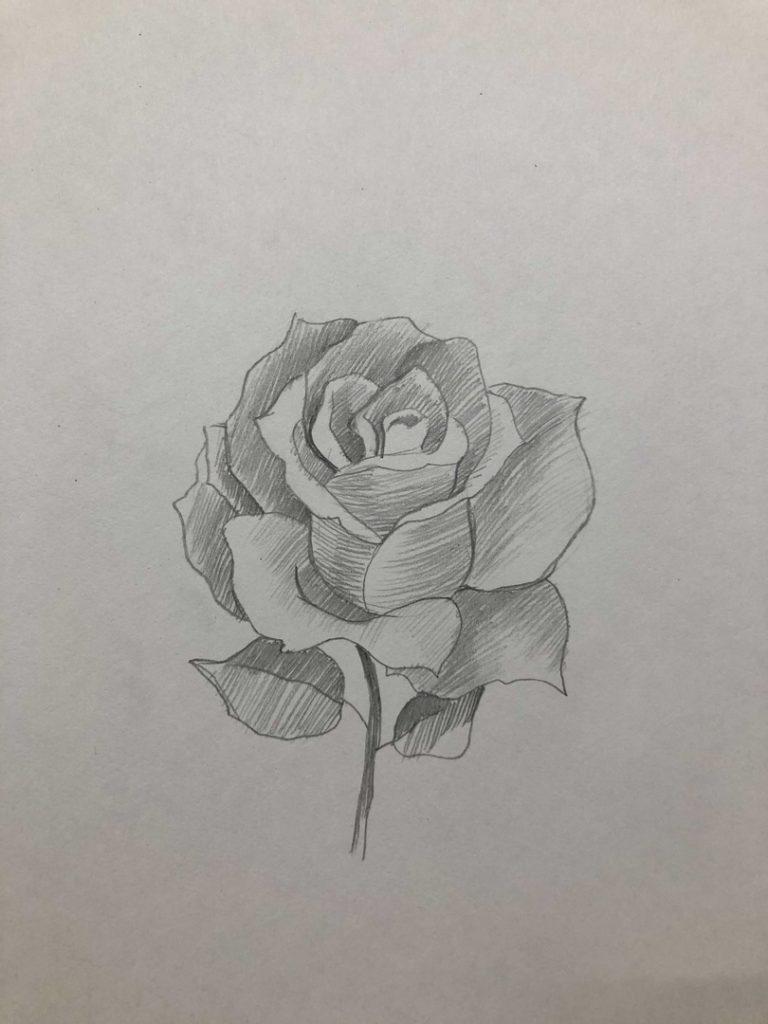 Как научиться рисовать карандашом - роза 4 этап - фото