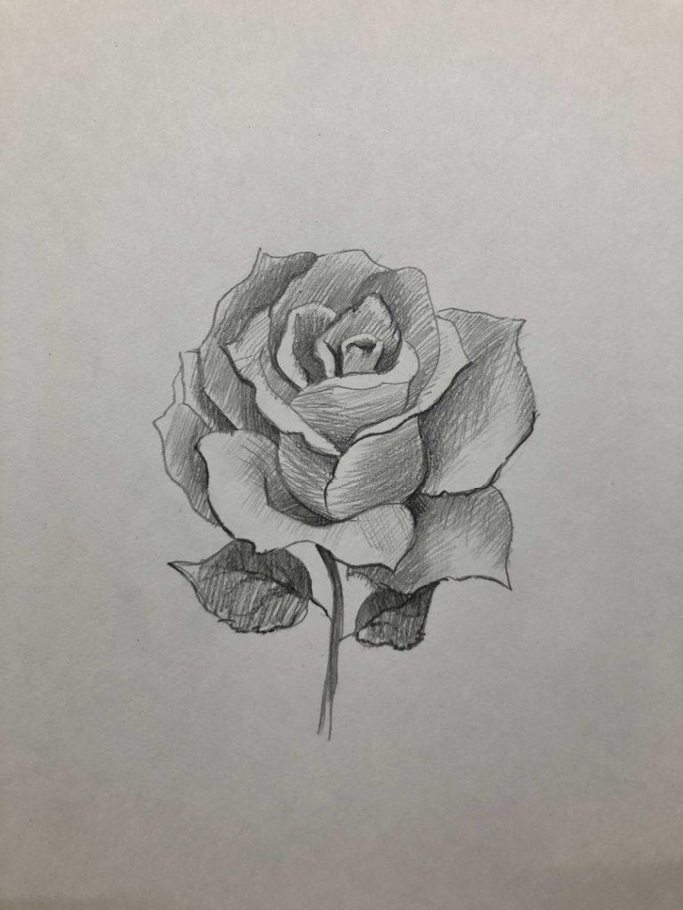 Как научиться рисовать карандашом - роза 5 этап - фото