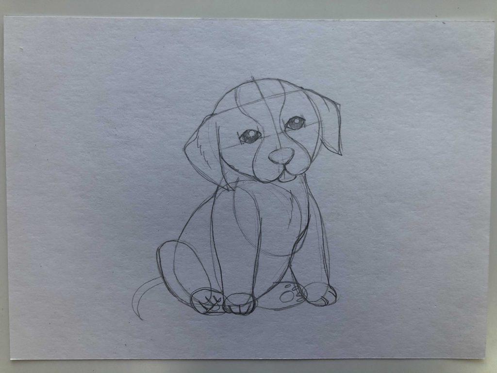 Как научиться рисовать карандашом - собака 2 этап - фото