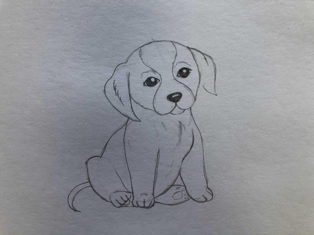 Как научиться рисовать карандашом - собака 3 этап - фото