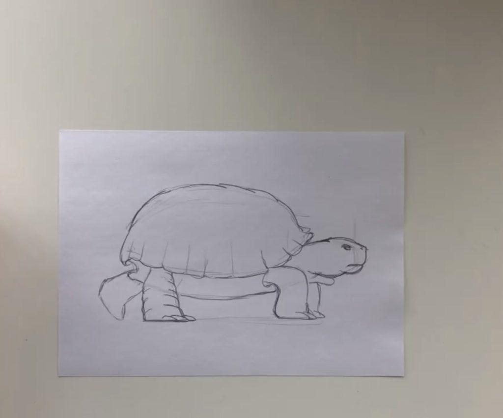 Как нарисовать карандашом черепаху поэтапно - 1 этап простая черепаха - фото