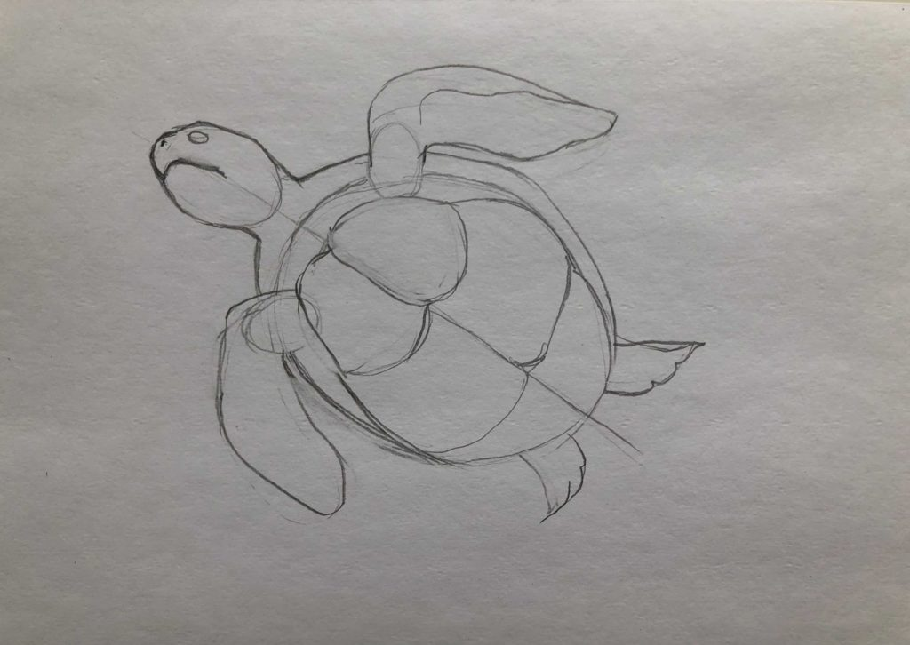 Как нарисовать карандашом черепаху поэтапно - 2 этап черепаха в воде - фото