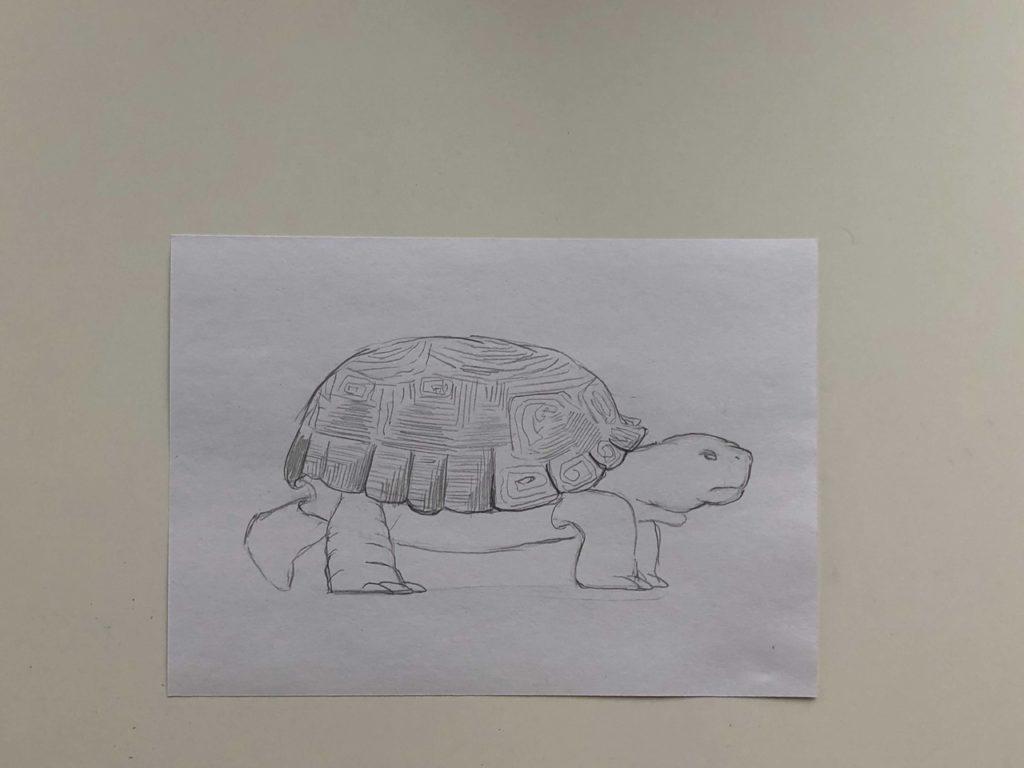 Как нарисовать карандашом черепаху поэтапно - 2 этап простая черепаха - фото