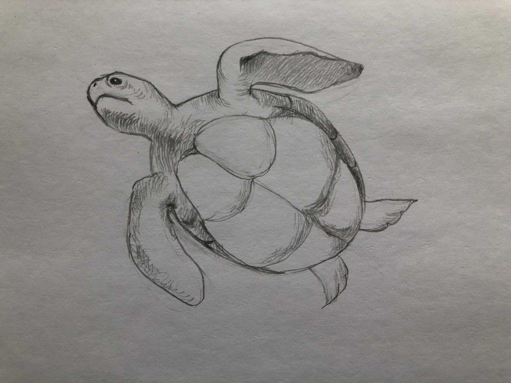 Как нарисовать карандашом черепаху поэтапно - 3 этап черепаха в воде - фото