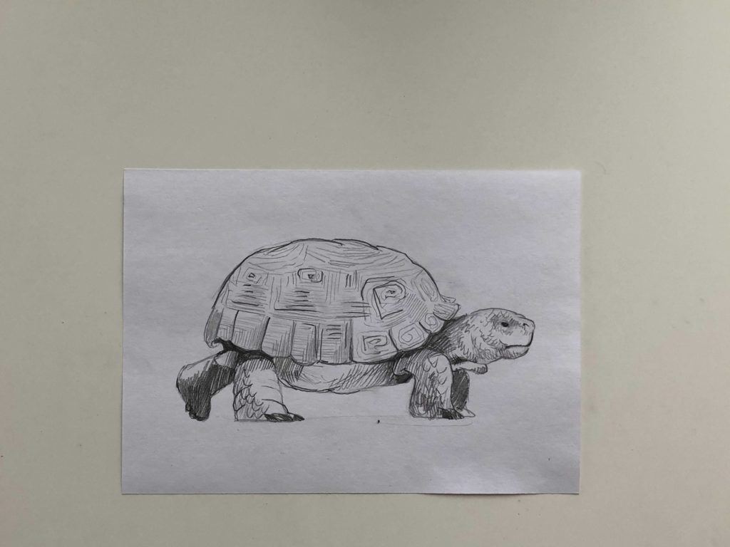 Как нарисовать карандашом черепаху поэтапно - 3 этап простая черепаха - фото