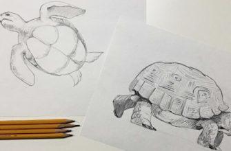 Как нарисовать карандашом черепаху поэтапно - фото