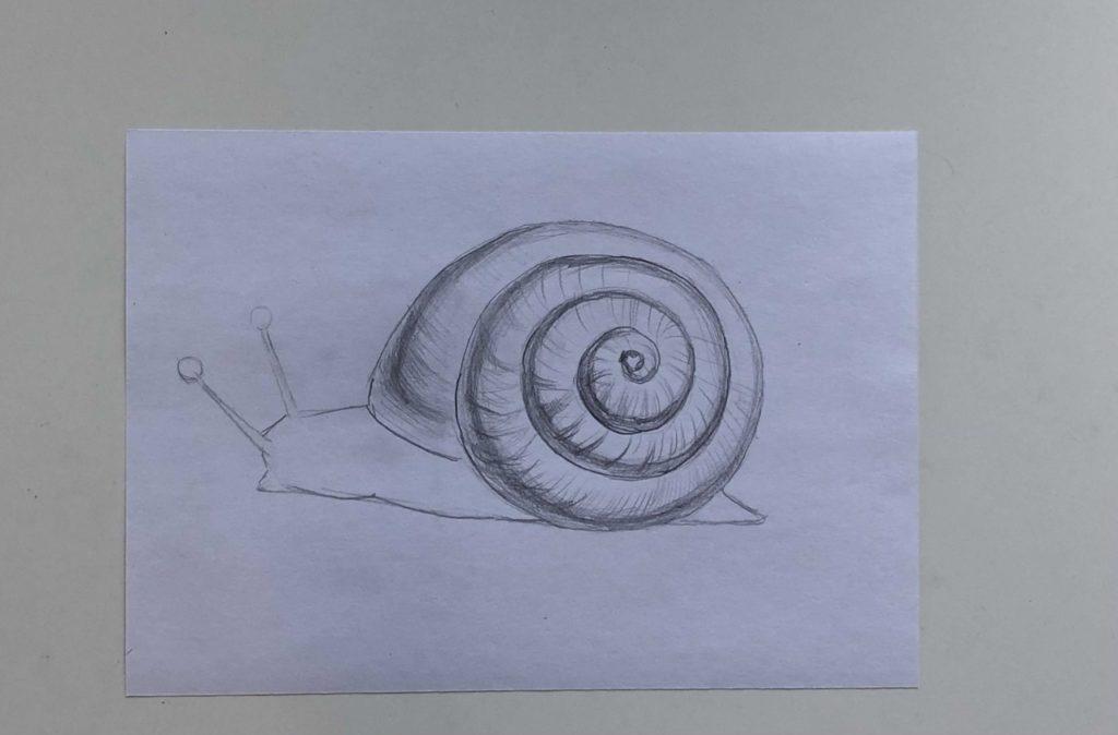 Как нарисовать простую улитку карандашом поэтапно - 2 этап