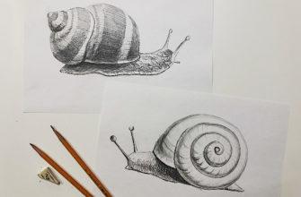 Как нарисовать улитку карандашом поэтапно - фото