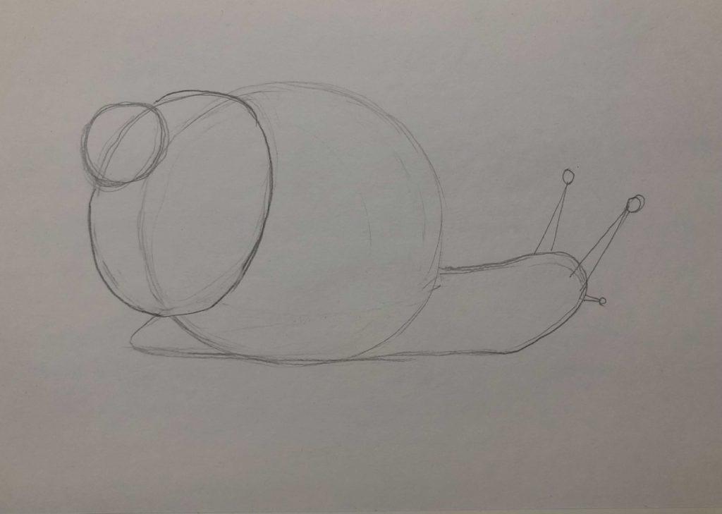 Как нарисовать улитку лужанку карандашом поэтапно - 1 этап