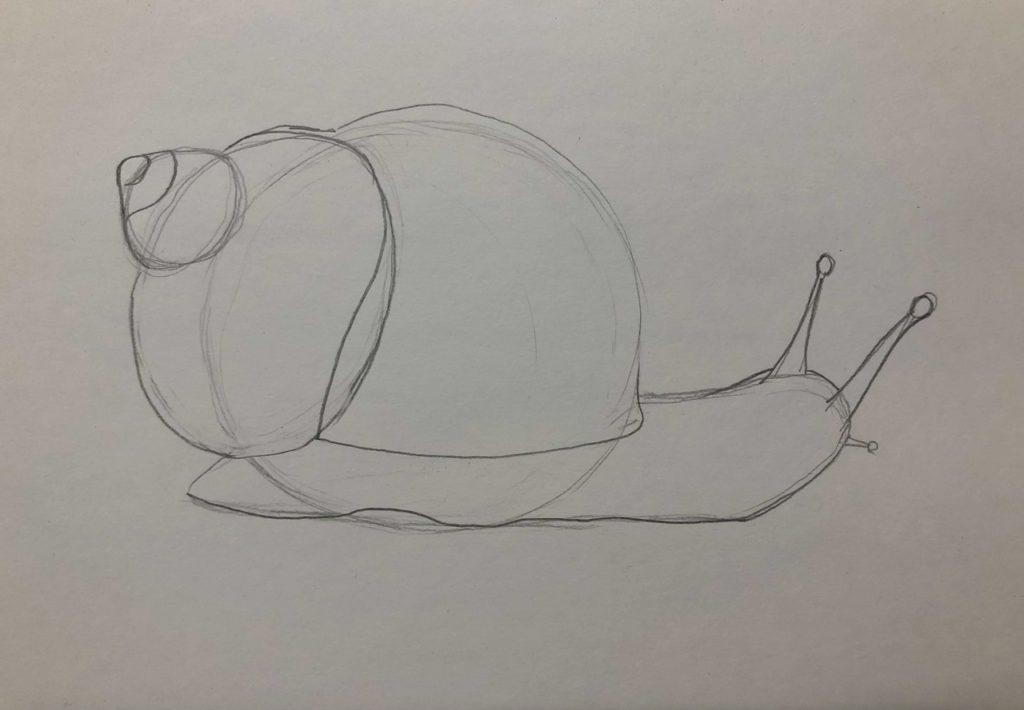 Как нарисовать улитку лужанку карандашом поэтапно - 2 этап
