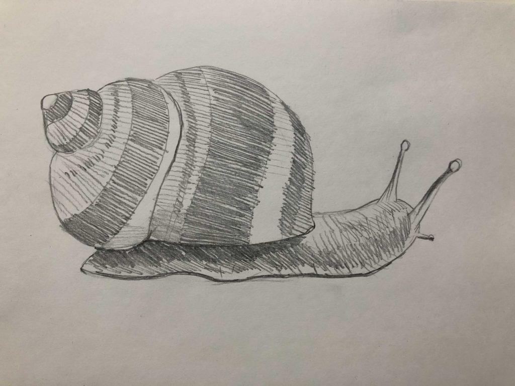 Как нарисовать улитку лужанку карандашом поэтапно - 3 этап