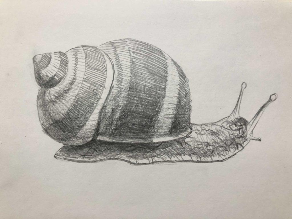 Как нарисовать улитку лужанку карандашом поэтапно - 4 этап