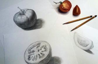 Как поэтапно нарисовать карандашом томат - фото