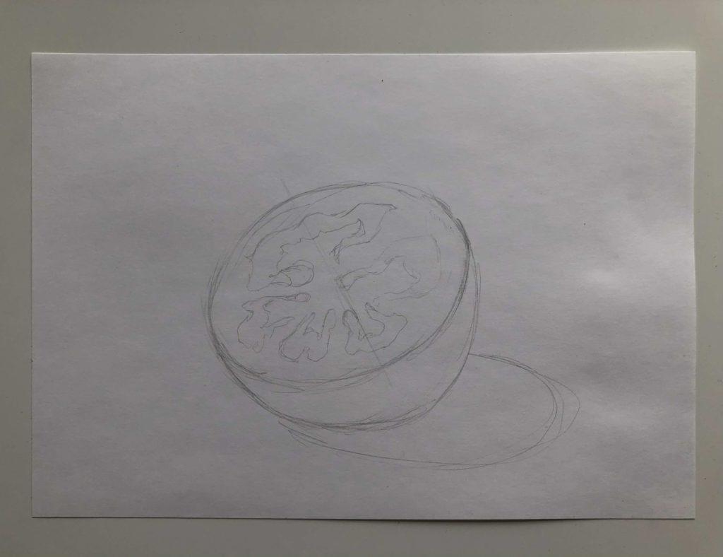 Как поэтапно нарисовать карандашом томат - в разрезе 1 этап - фото