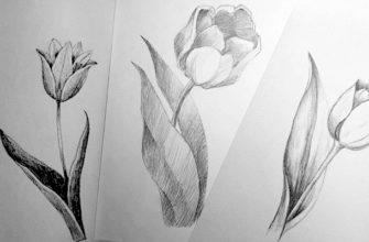 Как нарисовать тюльпан легко и быстро - фото