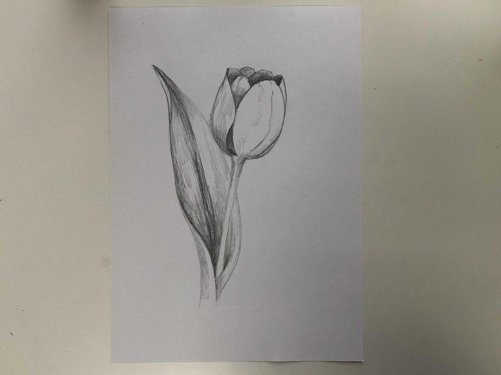 Как нарисовать тюльпан легко и быстро - простой тюльпан 2 этап - фото