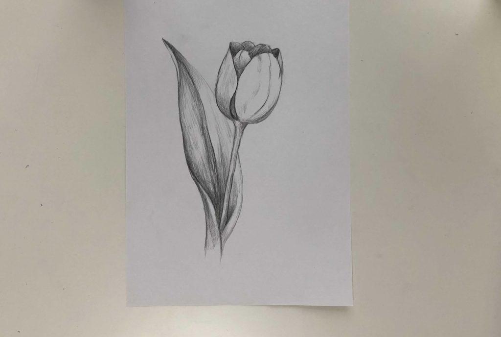 Как нарисовать тюльпан легко и быстро - простой тюльпан 3 этап - фото