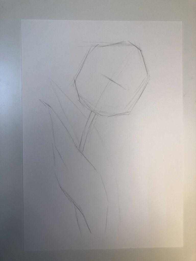 Как нарисовать тюльпан легко и быстро - раскрытый тюльпан 1 этап - фото