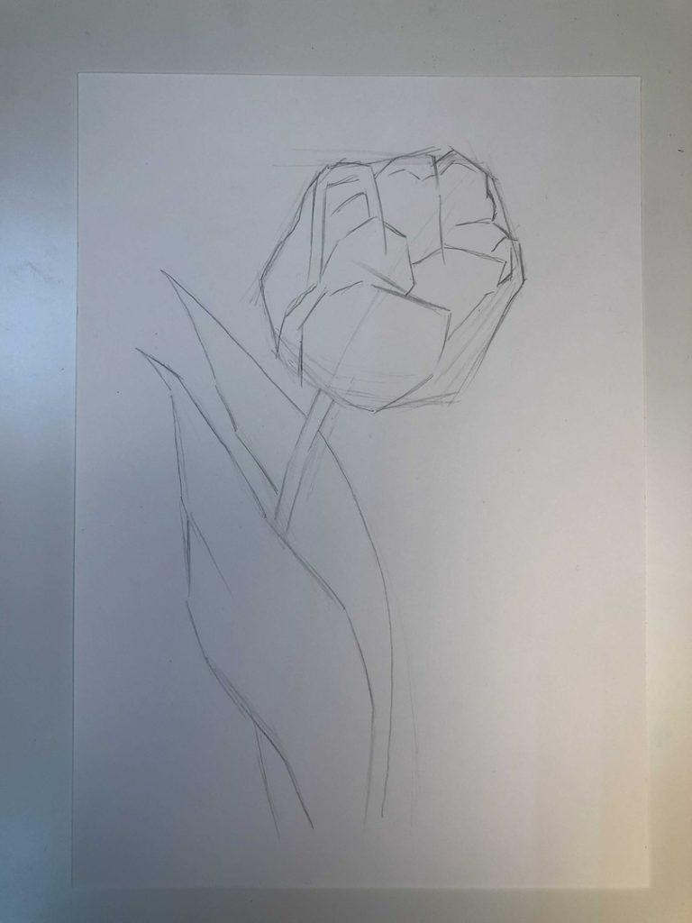 Как нарисовать тюльпан легко и быстро - раскрытый тюльпан 2 этап - фото