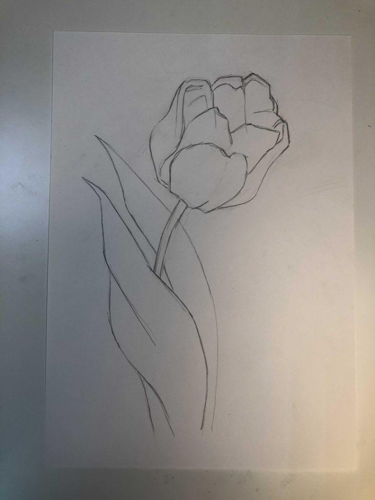 Как нарисовать тюльпан легко и быстро - раскрытый тюльпан 3 этап - фото