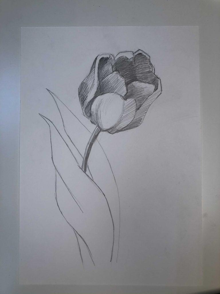 Как нарисовать тюльпан легко и быстро - раскрытый тюльпан 4 этап - фото