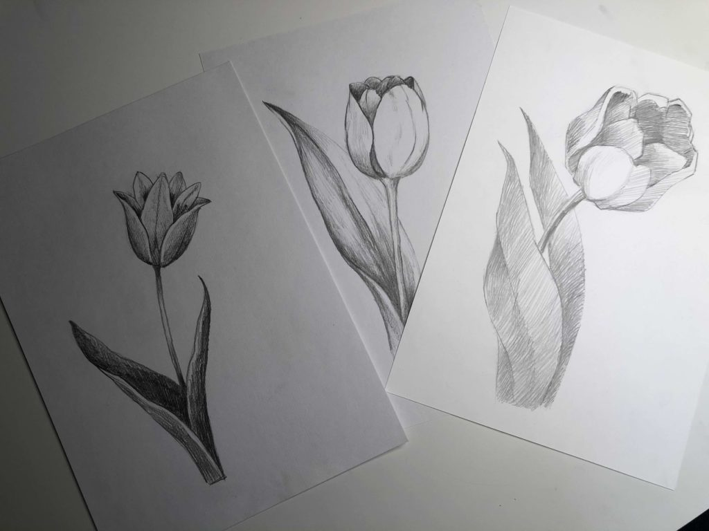 Как нарисовать тюльпан легко и быстро - раскрытый тюльпан 5 этап - фото
