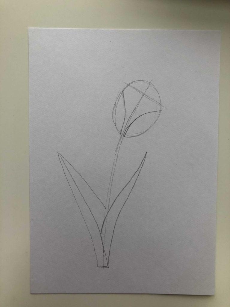 Как нарисовать тюльпан легко и быстро - тюльпан шренка 1 этап - фото