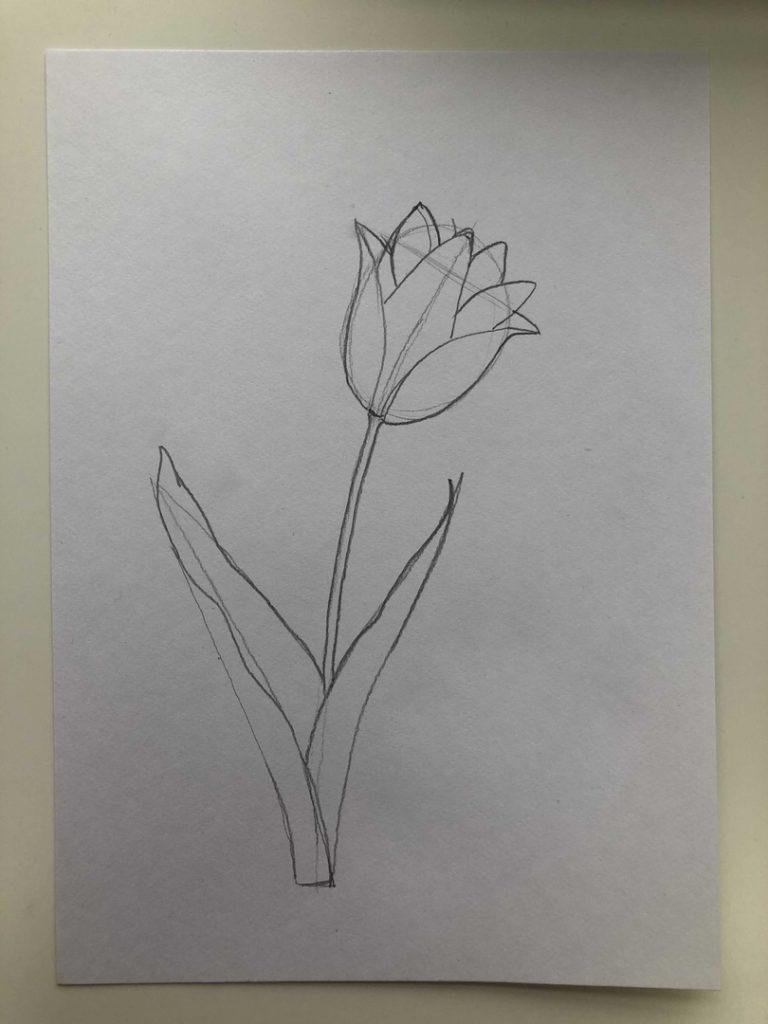 Как нарисовать тюльпан легко и быстро - тюльпан шренка 2 этап - фото
