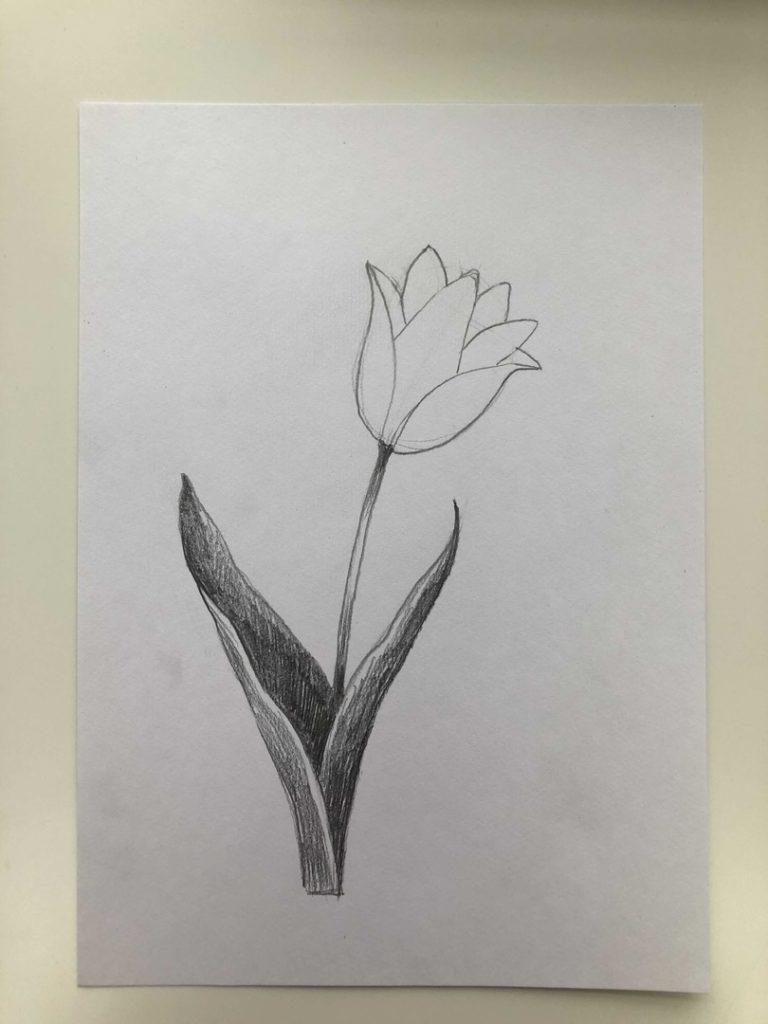 Как нарисовать тюльпан легко и быстро - тюльпан шренка 3 этап - фото