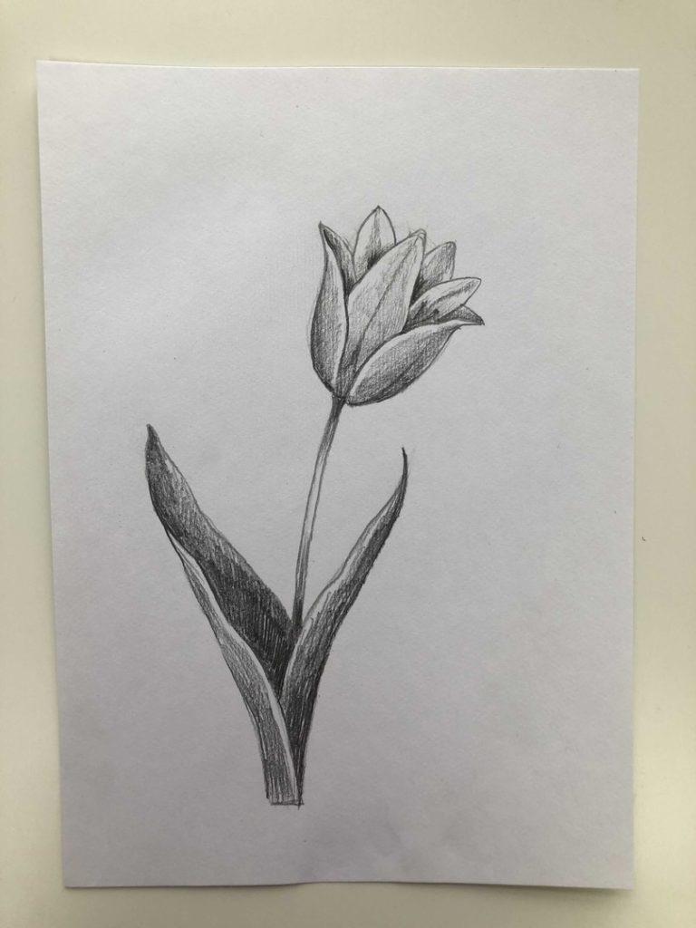 Как нарисовать тюльпан легко и быстро - тюльпан шренка 4 этап - фото