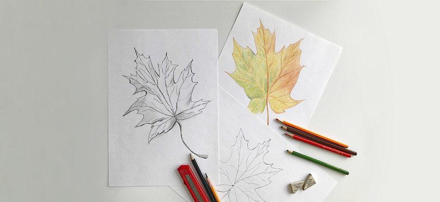 Листик клена рисунок карандашом - фото