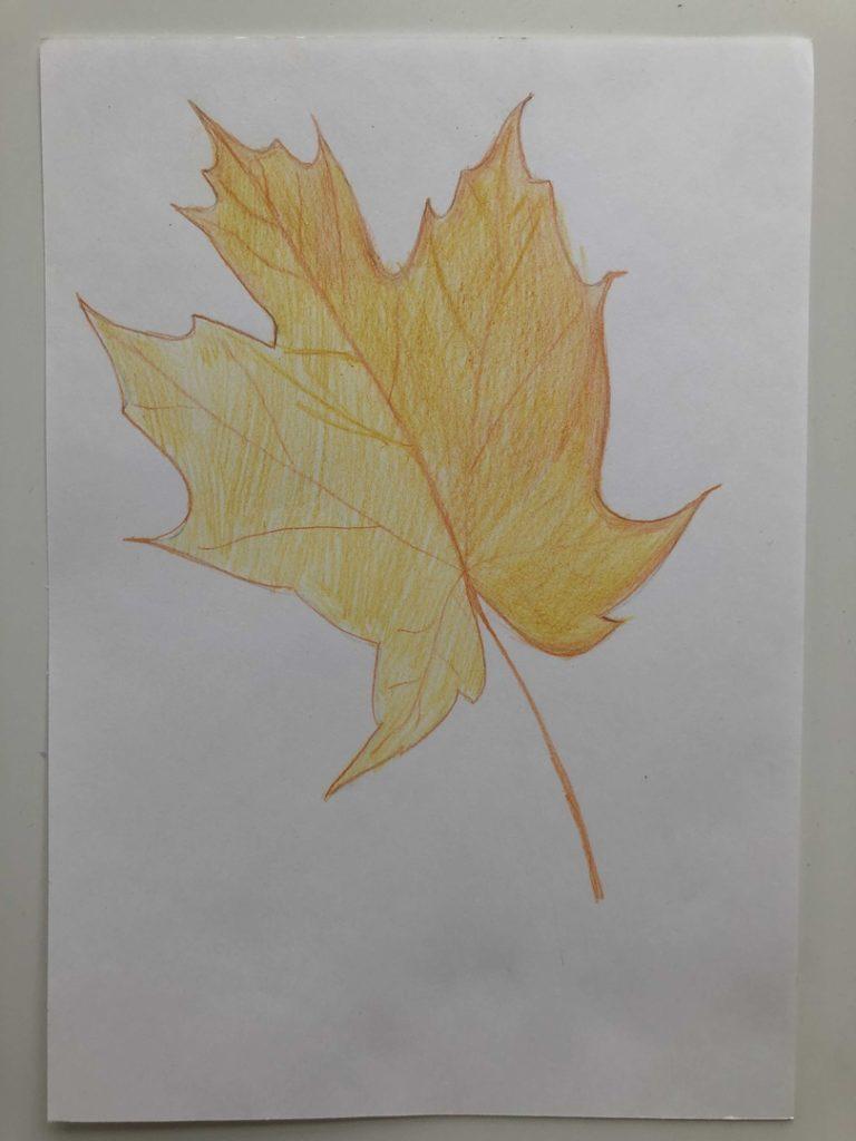 Листик клена рисунок карандашом - цветной лист 4 этап - фото