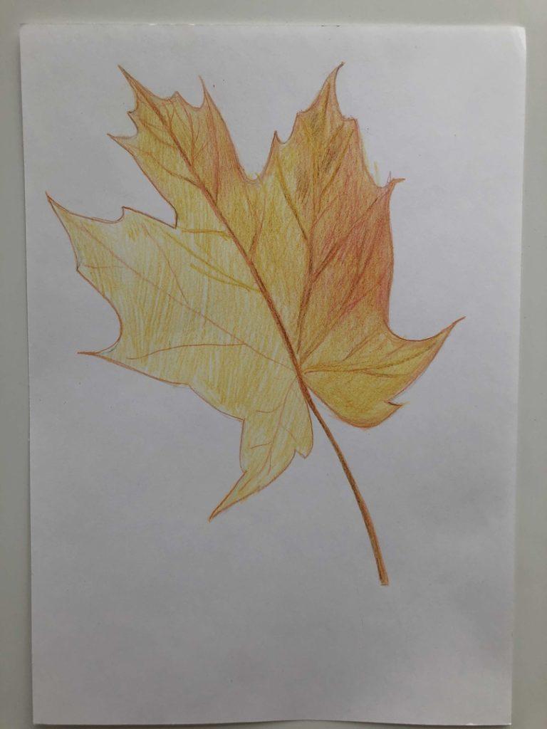 Листик клена рисунок карандашом - цветной лист 5 этап - фото