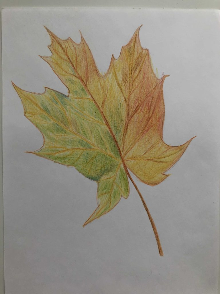 Листик клена рисунок карандашом - цветной лист 6 этап - фото