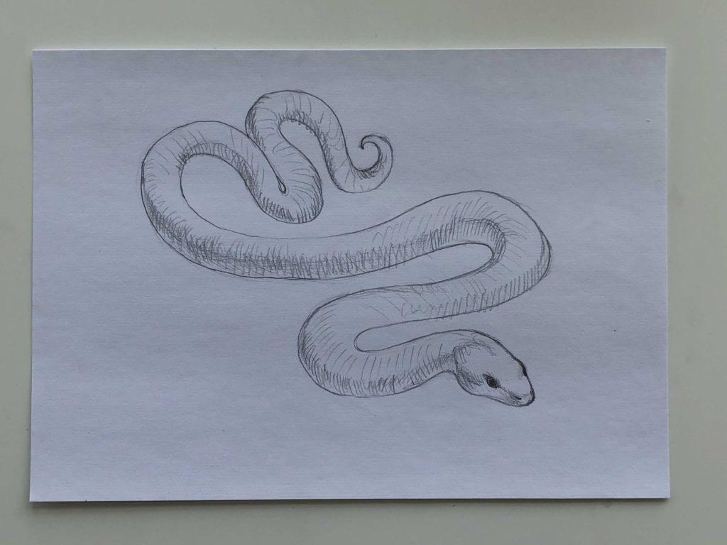 Как нарисовать змею карандашом поэтапно - простая змея 3 этап - фото