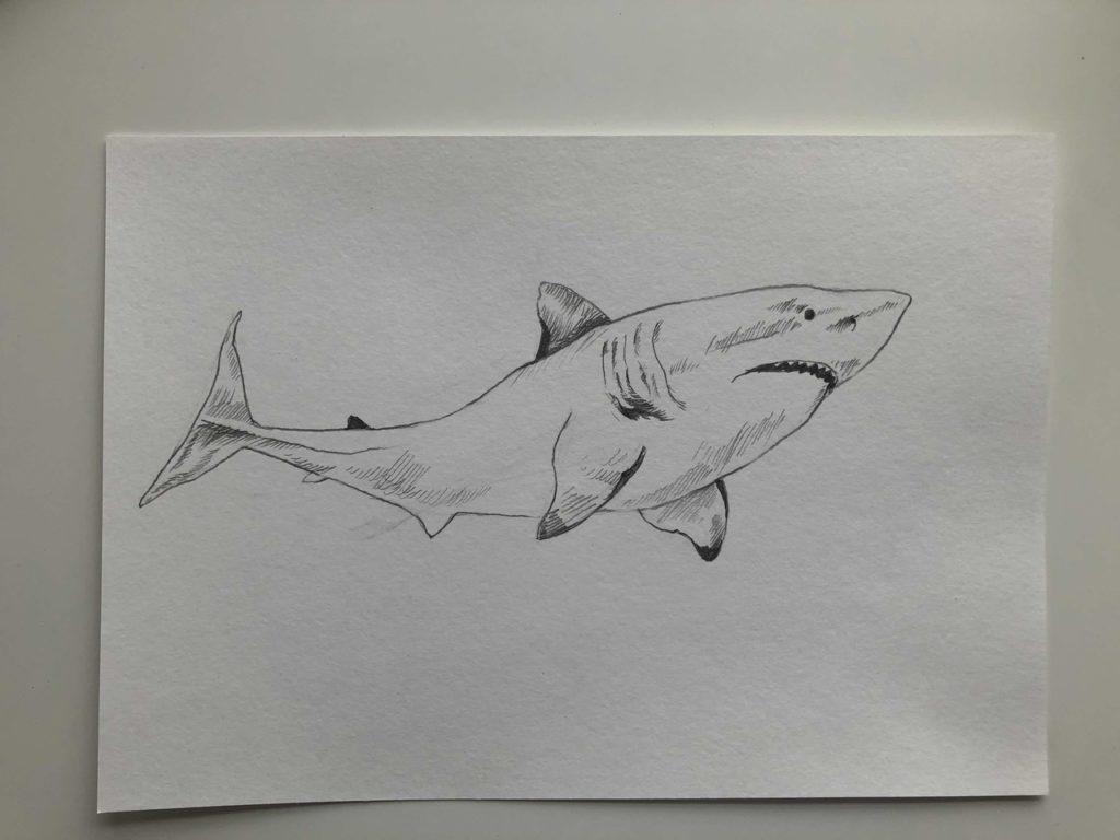 Как нарисовать акулу карандашом поэтапно - белая акула 3 этап - фото