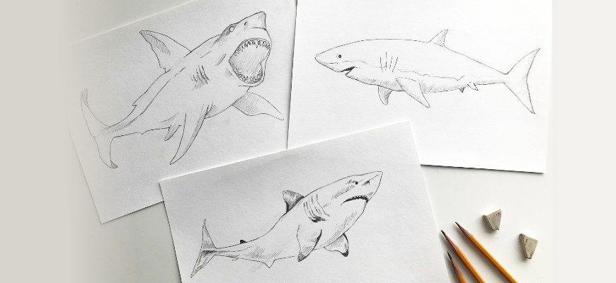Как нарисовать акулу карандашом поэтапно - фото