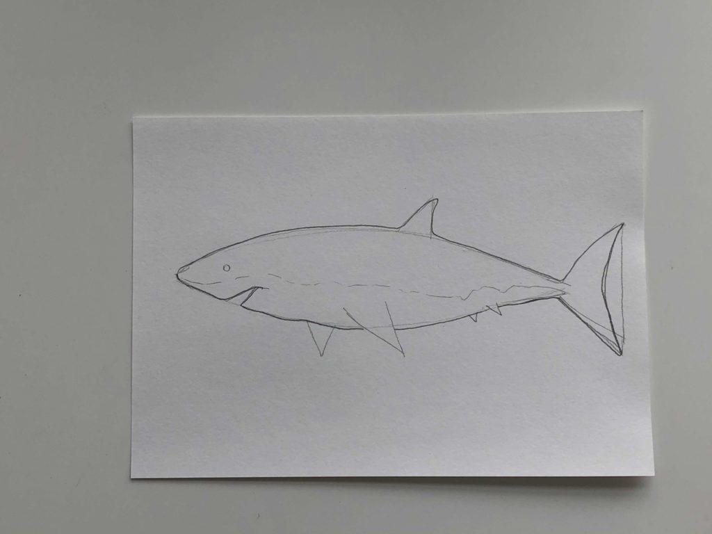 Как нарисовать акулу карандашом поэтапно - простая акула 2 этап - фото